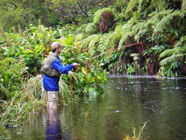Waikahe 39 olu chapter 403 for Fly fishing kauai